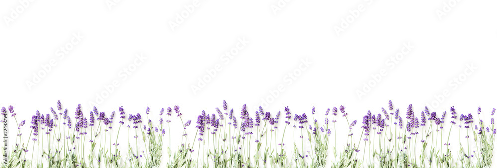 Fototapety, obrazy: Flowers composition. Frame made of fresh lavender flowers on white background. Lavender, floral background. Flat lay, top view, copy space, banner