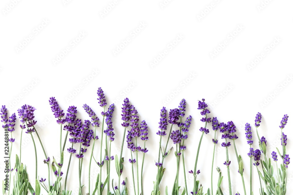 Fototapety, obrazy: Flowers composition. Frame made of fresh lavender flowers on white background. Lavender, floral background. Flat lay, top view, copy space