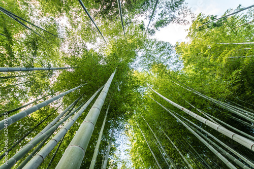In de dag Bamboo Bamboo forest in kyoto, Japan