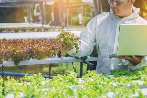 Biologist, Owner hydroponics vegetable farm in the greenhouse checking quality of the organic vegetables.