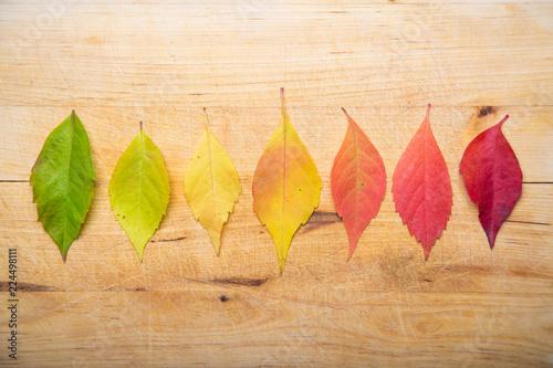 Valokuva  Leaf