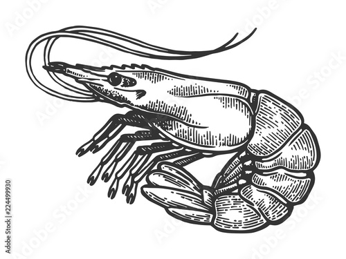 Photo Shrimp sea Caridea animal engraving vector illustration