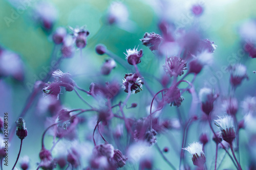 Staande foto Lente Creative background, small flowers on a tinted, gentle background in the open air. Spring summer, border pattern floral background. Air artistic image, free space. The nature of the concept.
