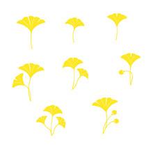 Set Of Ginkgo Leaves Illustration