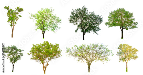 Isolated trees on white background , The collection of trees,Isolated trees of Thailand