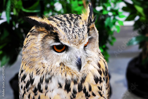 Spoed Foto op Canvas Uil Gray owl, yellow eyes