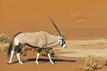 Namibia, Namib-Naukluft Nation...