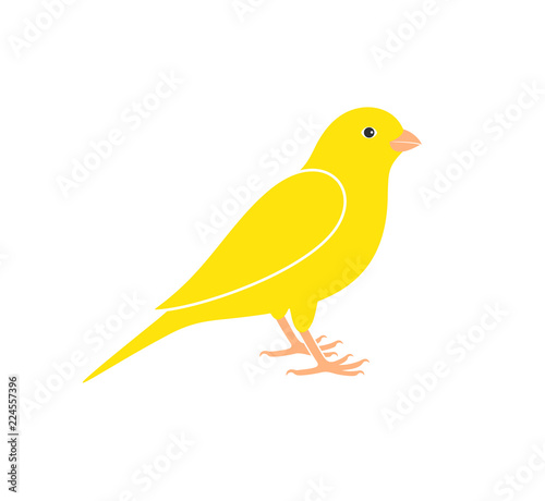 Canary logo. Isolated canary on white background Fototapeta