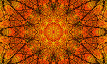 Natural Mandala With Shades Of...