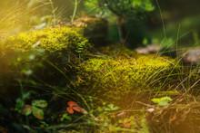 Forest Fairy Moss Green. Forest Texture