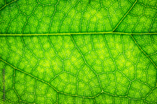 Detail of a fresh green leaf close up background. #224561308