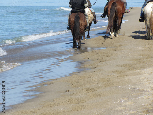 Tuinposter Paardrijden Men riding horses on the beach . Horseback riding on mediterranean coastline . Tuscany, Italy