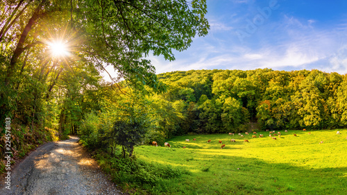 Landscape with a road next to a meadow with cows and bright sun shining through the trees