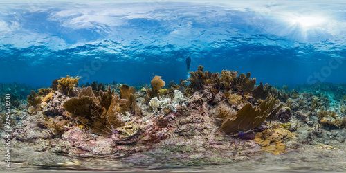 Poster Coral reefs Freediver in Florida