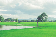 View Of The Countryside With C...
