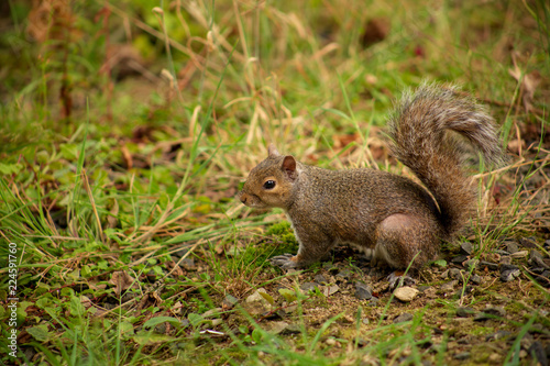 Tuinposter Eekhoorn squirrel eating nut