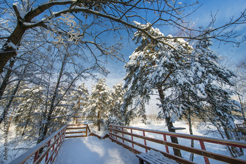 Fototapety, obrazy: Snow-covered landscape with trees and blue sky, Russian winter.