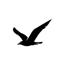Gull Vector Silhouette