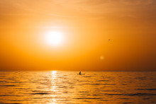 Paddle Boarder In The Sunset