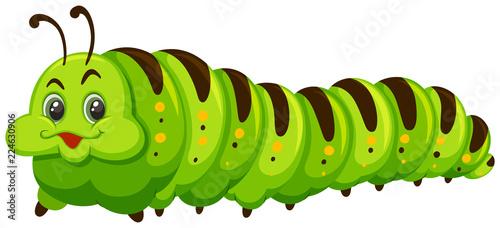 Fotografía Cute caterpillar on white background
