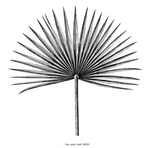 Fan Palm Leaf Hand Draw Vintag...