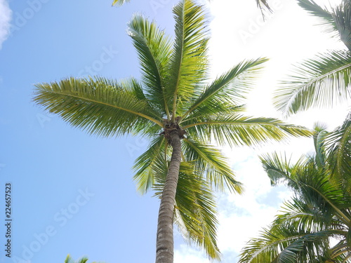 Foto op Plexiglas Palm boom palm tree and blue sky