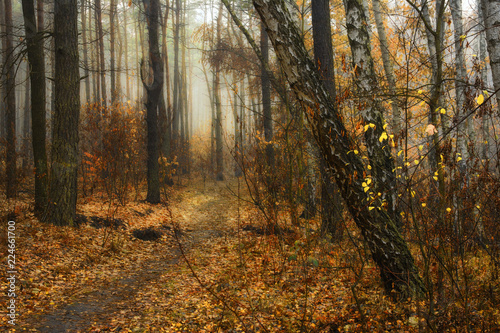 Photo walk in the autumn forest