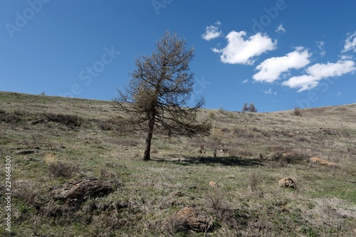 Tuinposter Grijs Mountain landscape in the area of the river Yarlyamry. Mountain Altai. Siberia. Russia