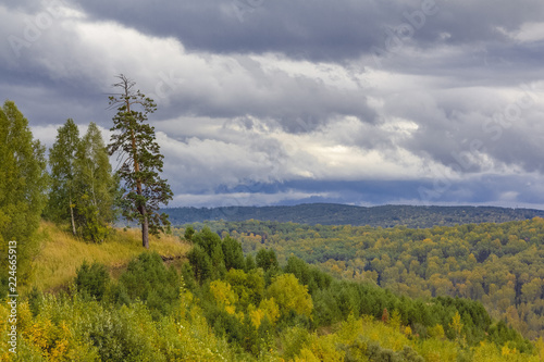 A magnificent autumn landscape with a high pine at the cliff and a dense forest, stretching away to thick clouds.
