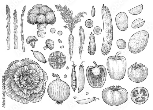 Obraz Vegetable collection, illustration, drawing, engraving, ink, line art, vector - fototapety do salonu