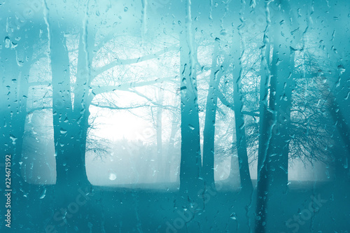 Wall Murals Forest Autumn morning forest through the window glass in the rain. Rain drops on the misted window glass