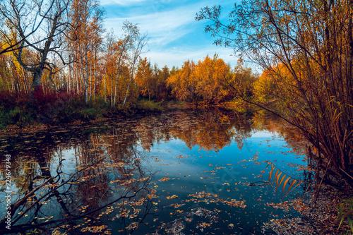 Keuken foto achterwand Baksteen Autumn natural landscape near the forest river