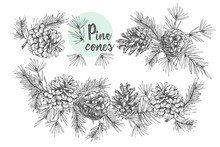Set Card Template With Pattern Realistic Botanical Ink Sketch Of Fir Tree Branches With Pine Cone On White Background. Vector Illustrations