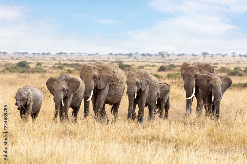 Elephant group in the Masai Mara