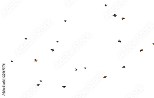 Fotografia Fliegender Bienenschwarm
