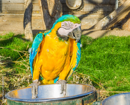 Staande foto Papegaai beautiful animal portrait of a colorful macaw parrot bird sitting and looking towards the camera