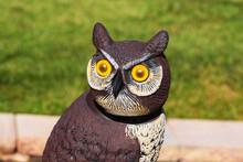 This Owl Has Kept A Close Eye ...