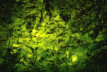 Dried Nori Seaweed Laminaria S...