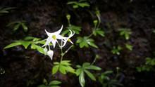Little White Flowers On A Rock...