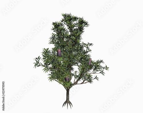 Fototapeta Grüne Bäume mit Kronendach obraz na płótnie