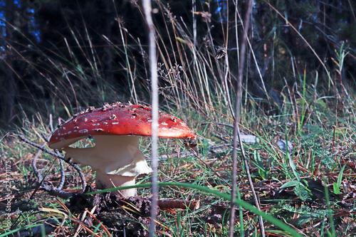 Dancing mushroom Fototapeta
