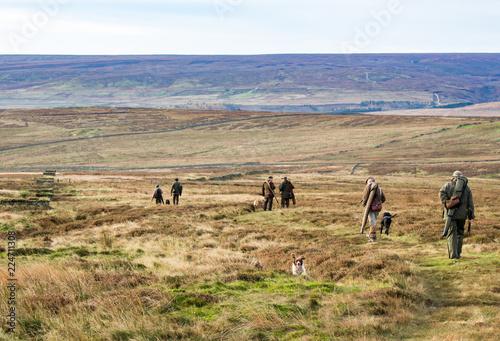 on the grouse moor Fototapet