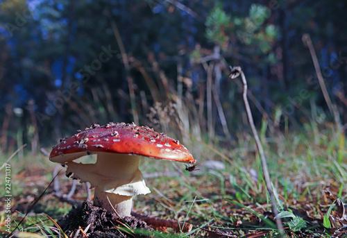 Stampa su Tela Dancing mushroom