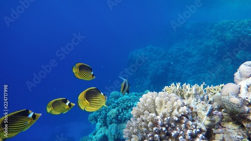 Spoed Foto op Canvas Koraalriffen Coral reef, tropical fish. Warm ocean and clear water. Underwater world.