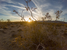 Desert Sunset, Joshua Tree, Yu...