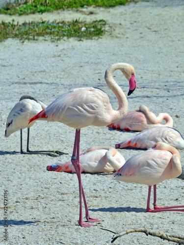 Foto op Plexiglas Flamingo gruppo di fenicotteri rosa