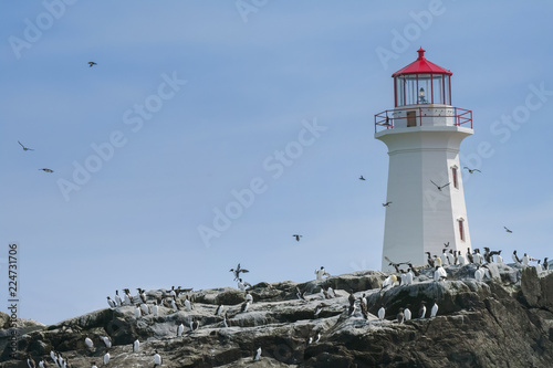 Puffins flying around the Lighthouse on Machias Seal Island