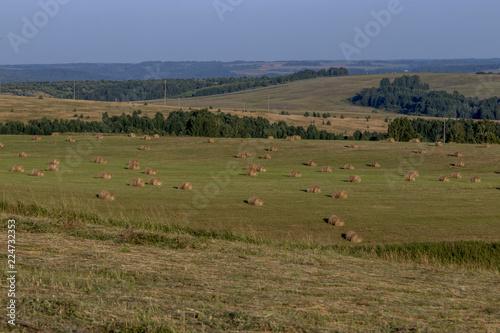 In de dag Inspirerende boodschap Свежее сено летним вечером на поле