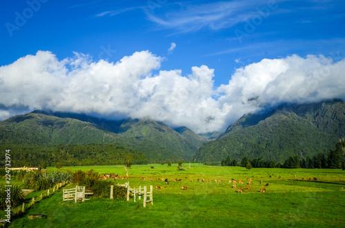 Foto op Plexiglas Oceanië New Zealand countryside landscape