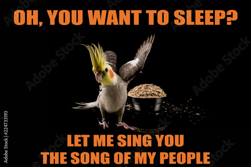 Funny Parrot Meme You Want To Sleep Let Me Sing You The Song Of